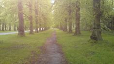 The seemingly endless Lime Tree Avenue